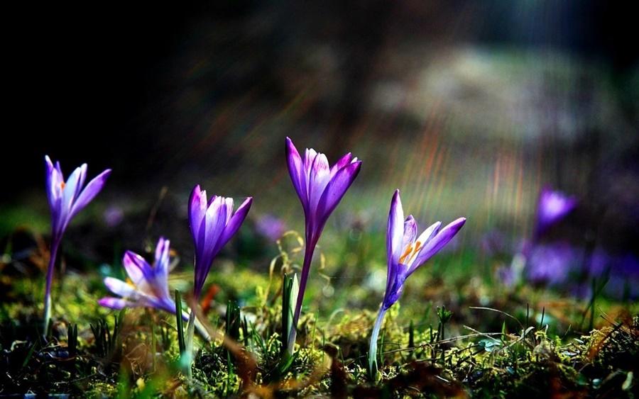 springhascome_01.jpg