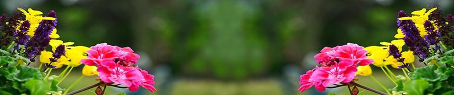 springhascome_03.jpg