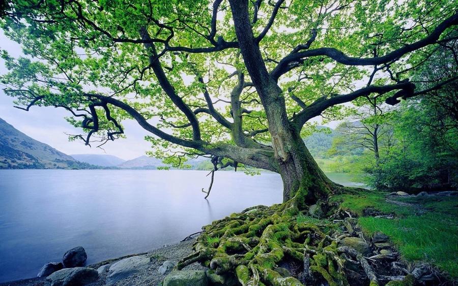 springhascome_04.jpg