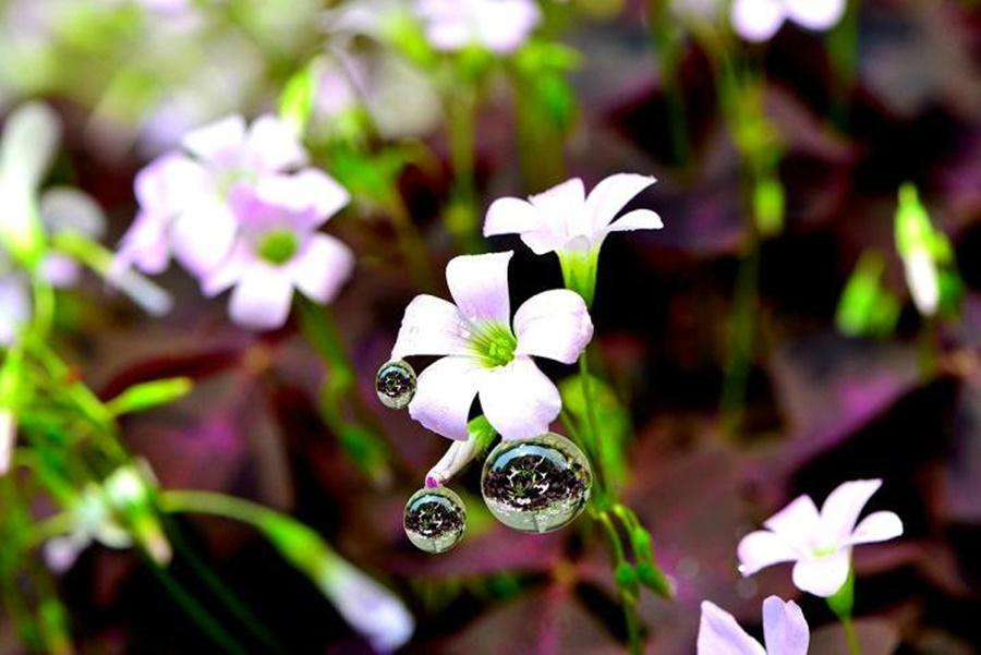 springhascome_09.jpg