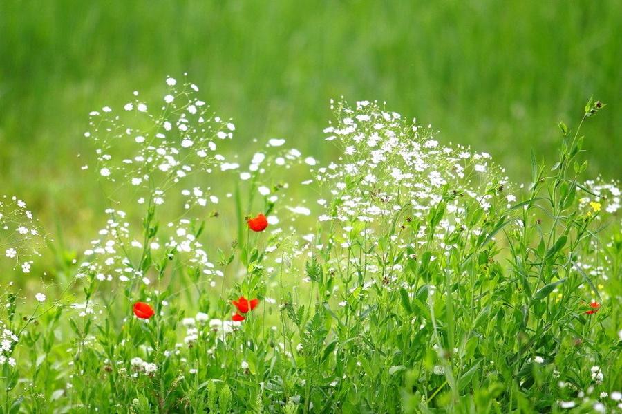 springhascome_10.jpg