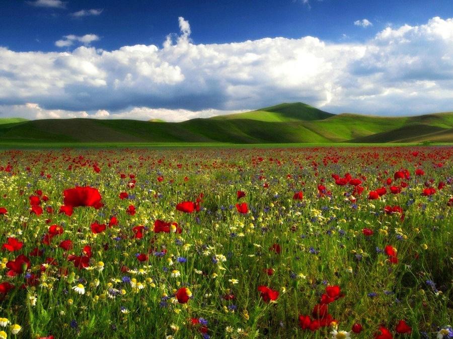 springhascome_15.jpg