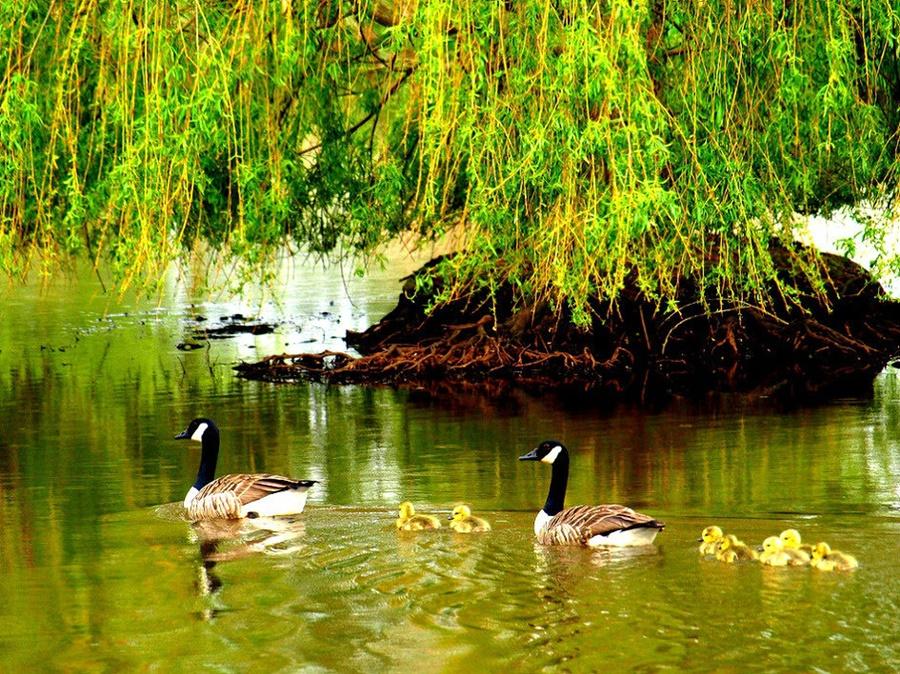 springhascome_17.jpg