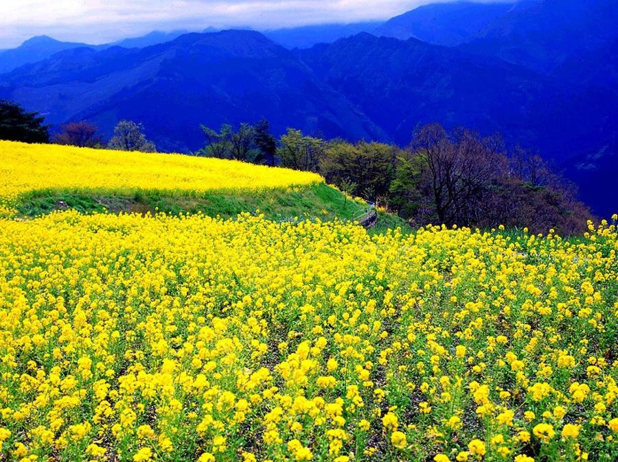 springhascome_23.jpg