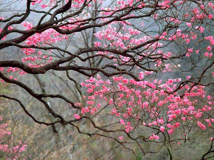 springhascome_24.jpg
