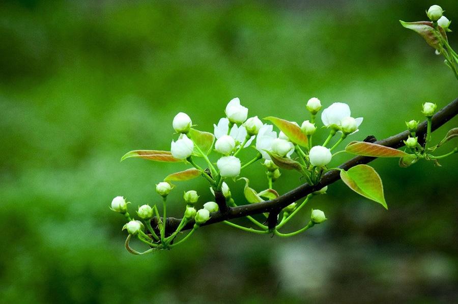 springhascome_25.jpg