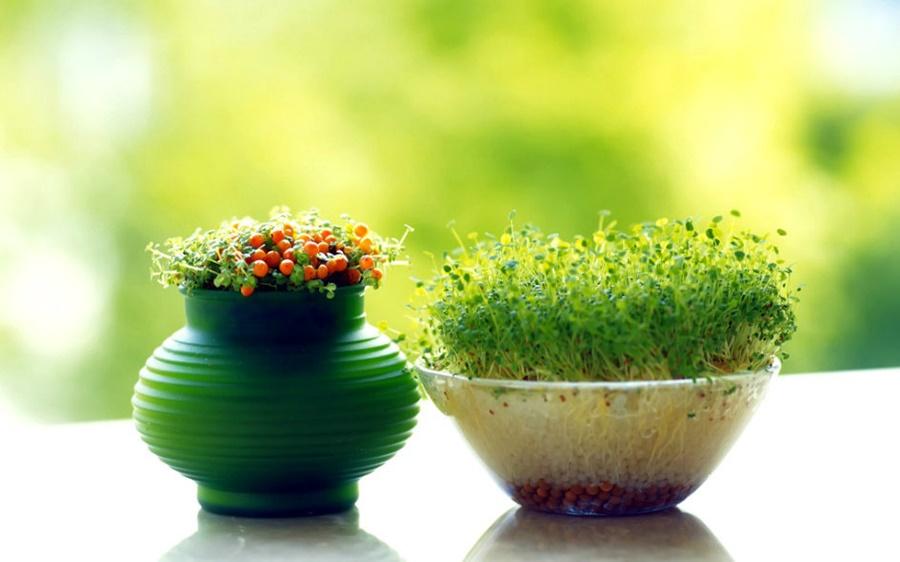 springhascome_29.jpg