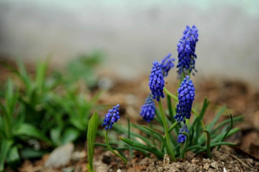 springhascome_32.jpg