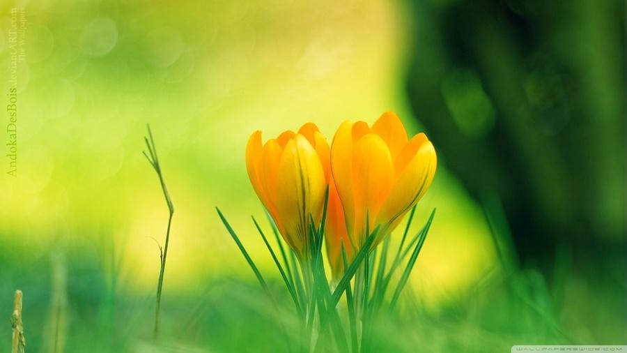 springhascome_35.jpg