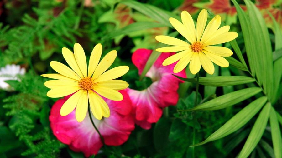 springhascome_40.jpg