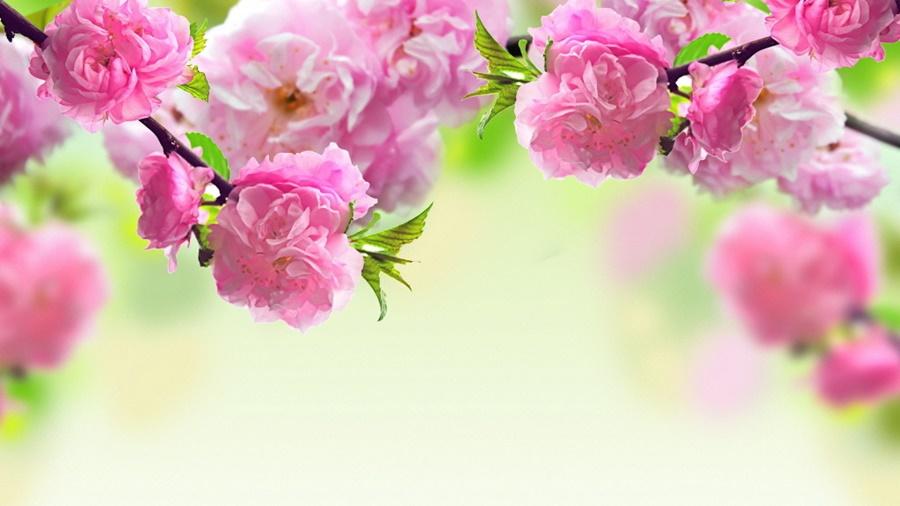 springhascome_42.jpg