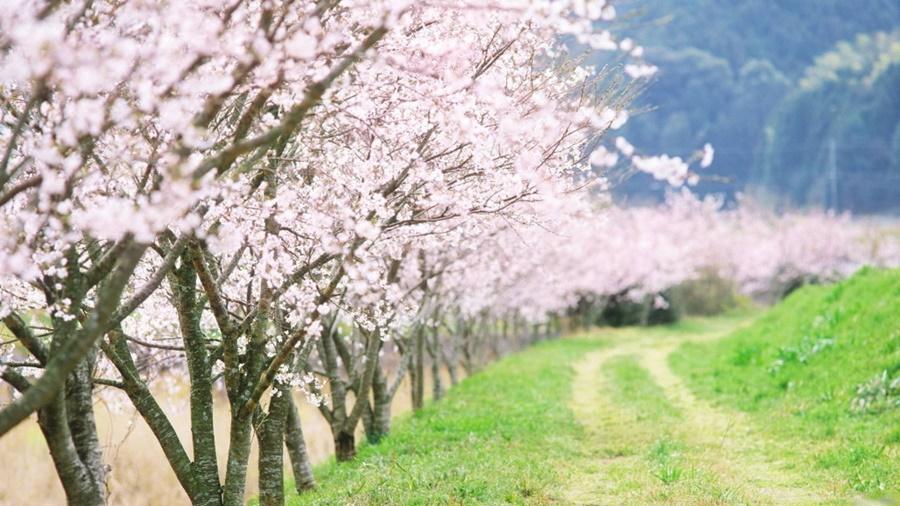 springhascome_43.jpg