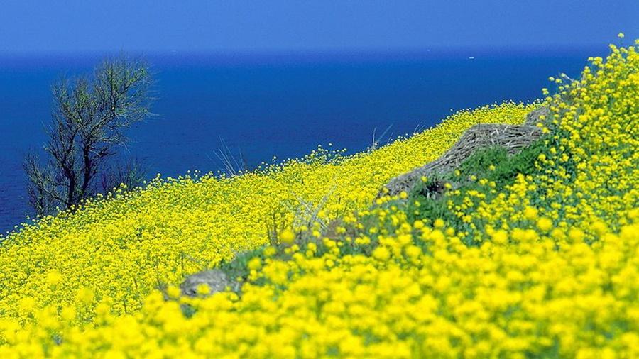 springhascome_45.jpg