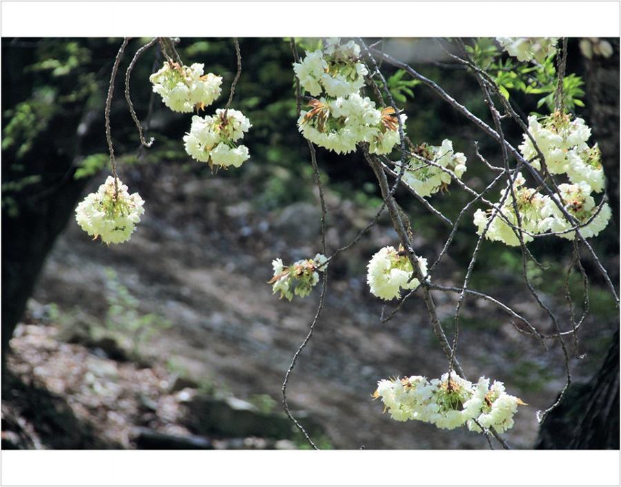 springhascome_46.jpg