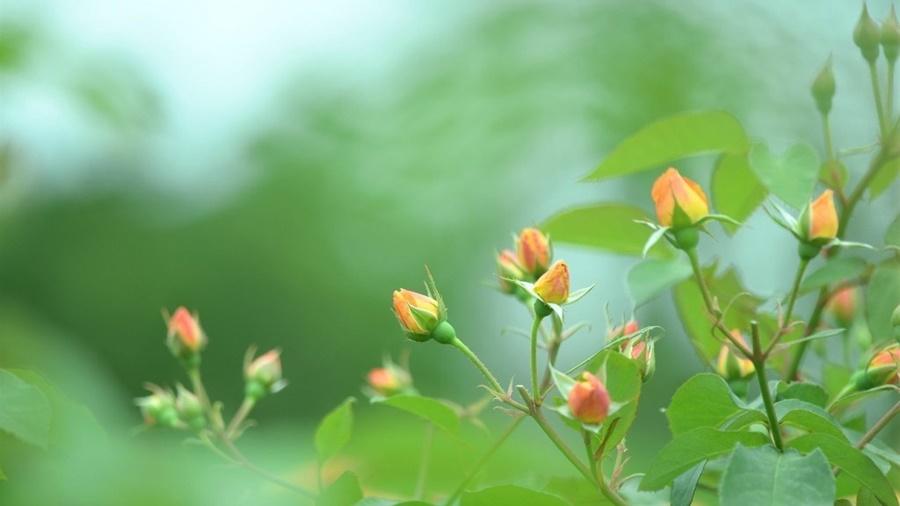 springhascome_48.jpg