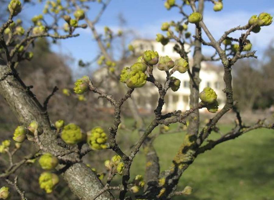 springhascome_49.jpg