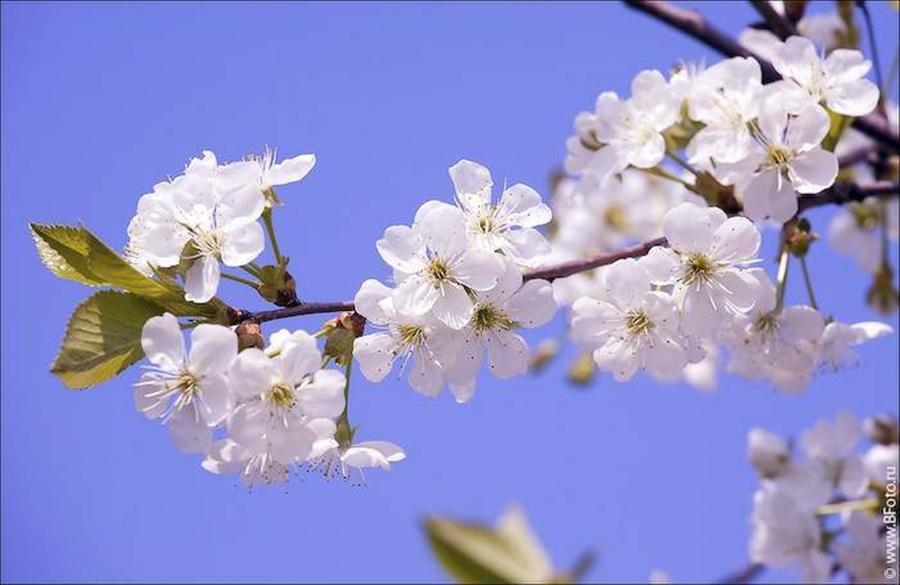 springhascome_50.jpg