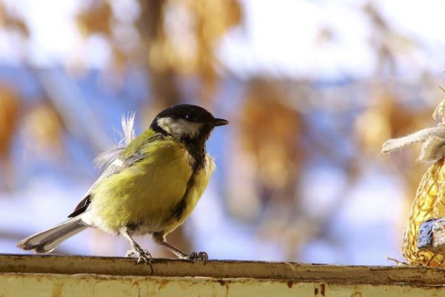 springhascome_53.jpg