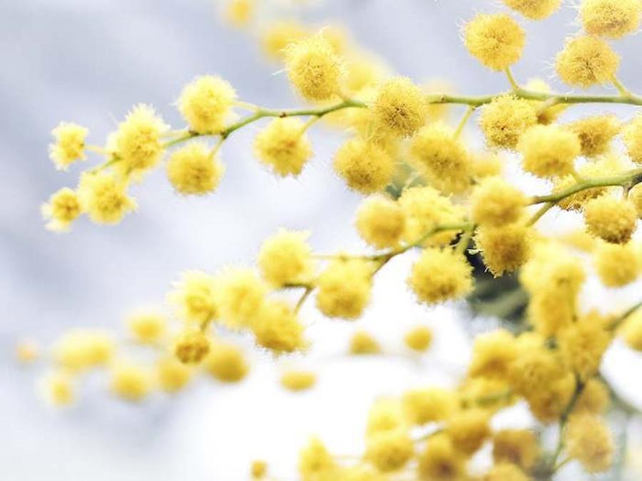 springhascome_54.jpg