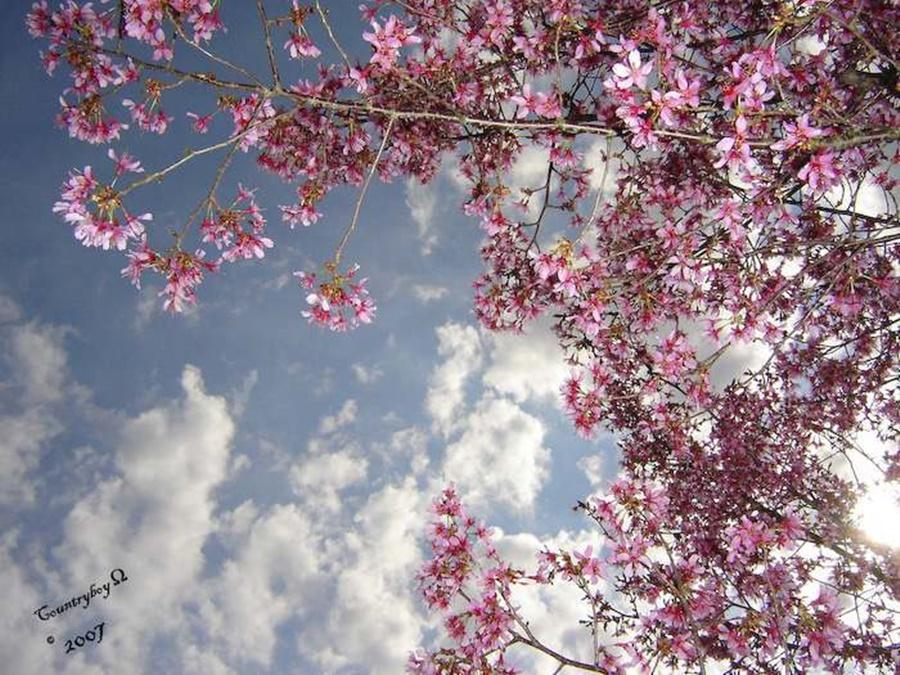 springhascome_55.jpg