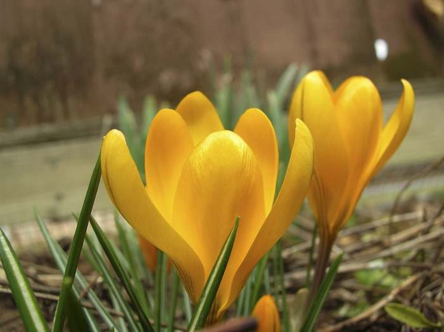 springhascome_58.jpg