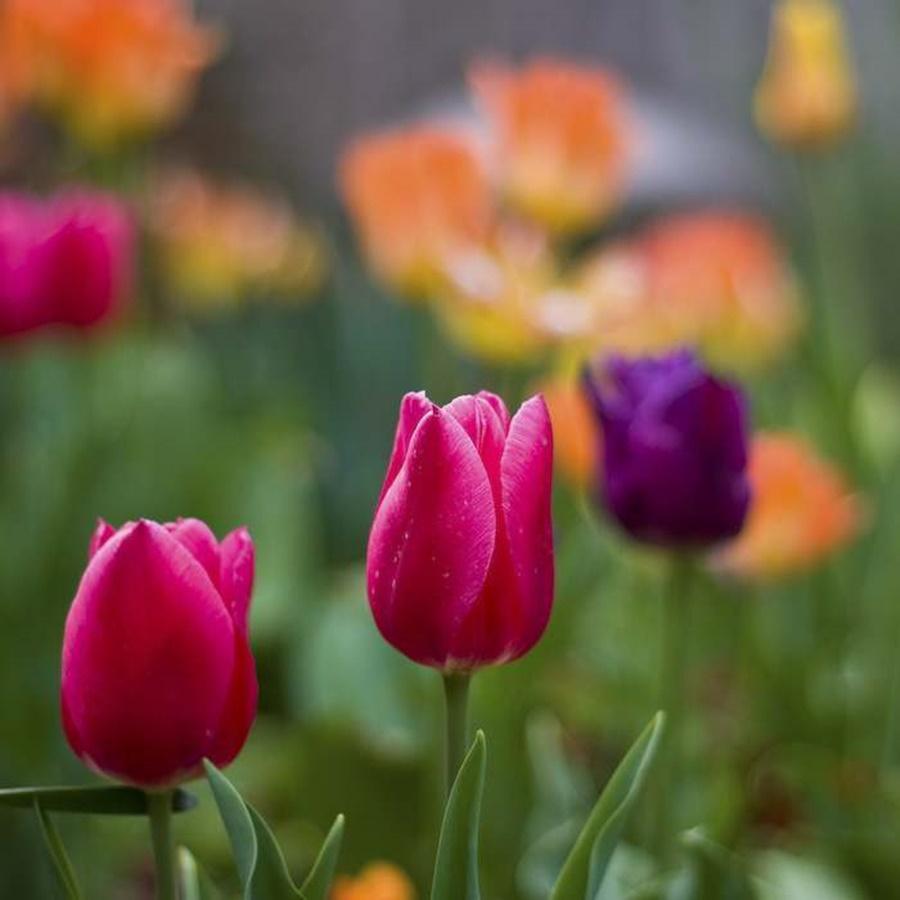 springhascome_59.jpg