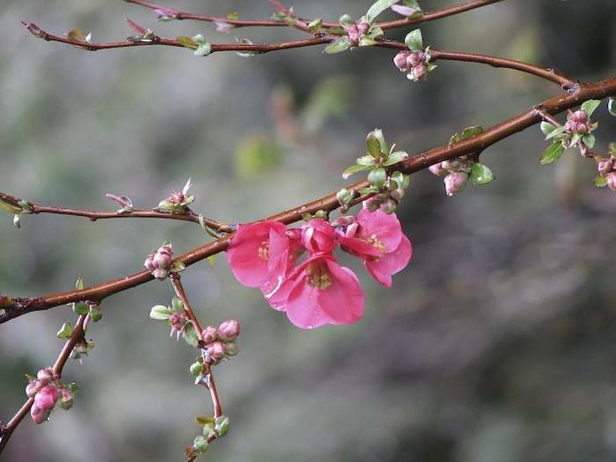 springhascome_60.jpg