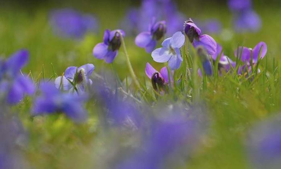 springhascome_61.jpg