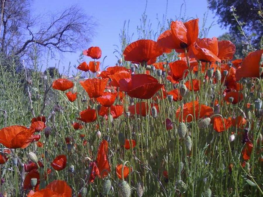 springhascome_63.jpg