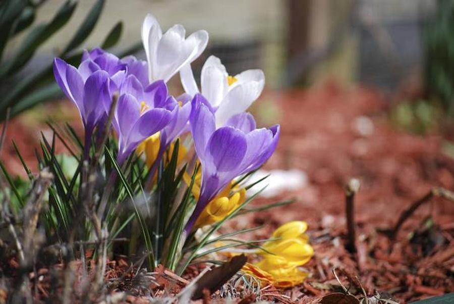 springhascome_64.jpg