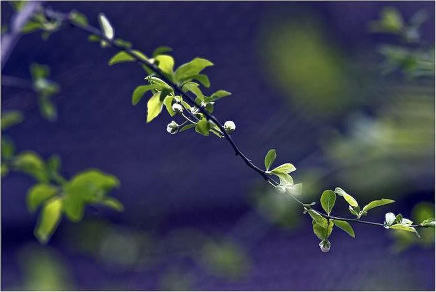 springhascome_66.jpg