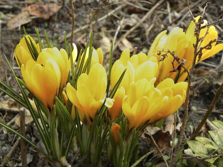 springhascome_67.jpg