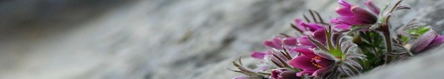 springhascome_69.jpg