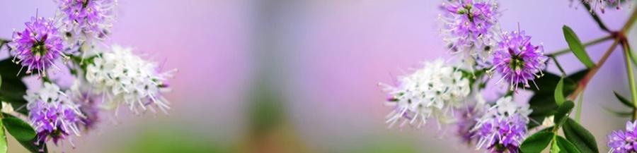 springhascome_73.jpg